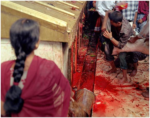 Sacrifice: Dakshinkali Temple